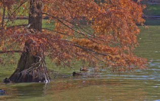 Autumn in El Retiro Park (Madrid, Spain)